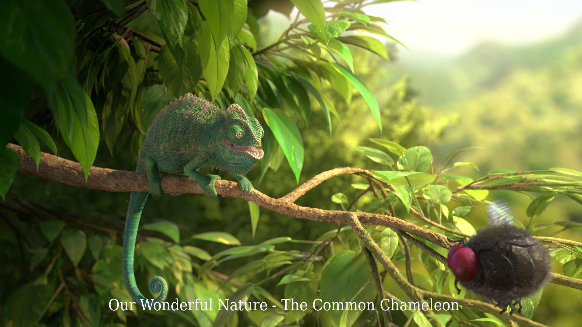 Our wonderful nature common cameleon